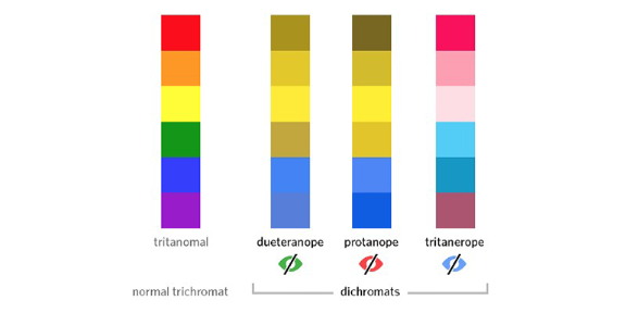 Differences between normal trichromat and dichromats.